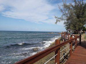 Grateful Dead Tribute Site - Sea View1